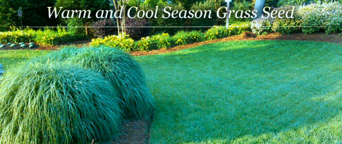 Warm and Cool Season Grass Seed