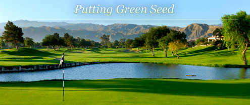 Putting Green Seed