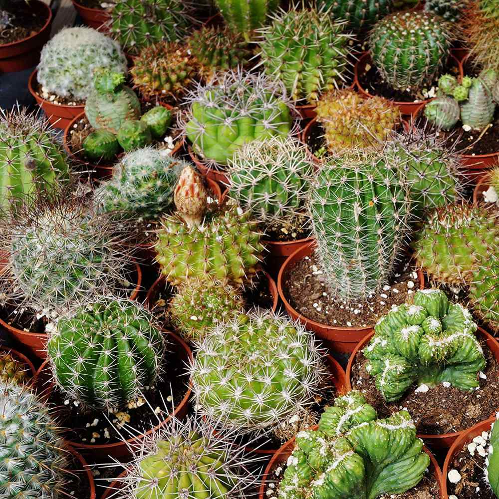 Cactus Seed Mix