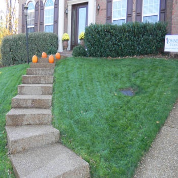 Grass Seed Lawn